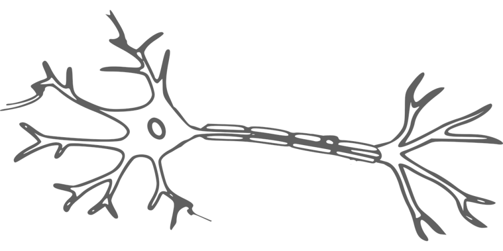 Brain Neuron Nerves Cell Science  - OpenClipart-Vectors / Pixabay